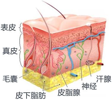 副乳切除皮肤切开法